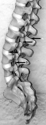 spine3.jpg