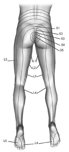 back_legs.jpg